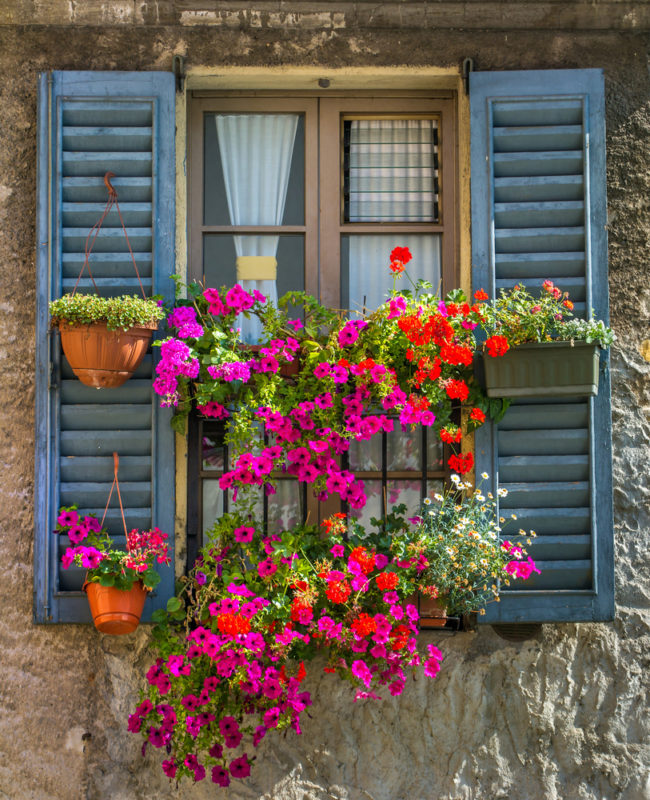 wooden window with rustic blue shutters and lots of flowers