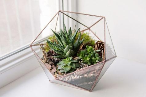 a geometric terrarium with spiky succulents
