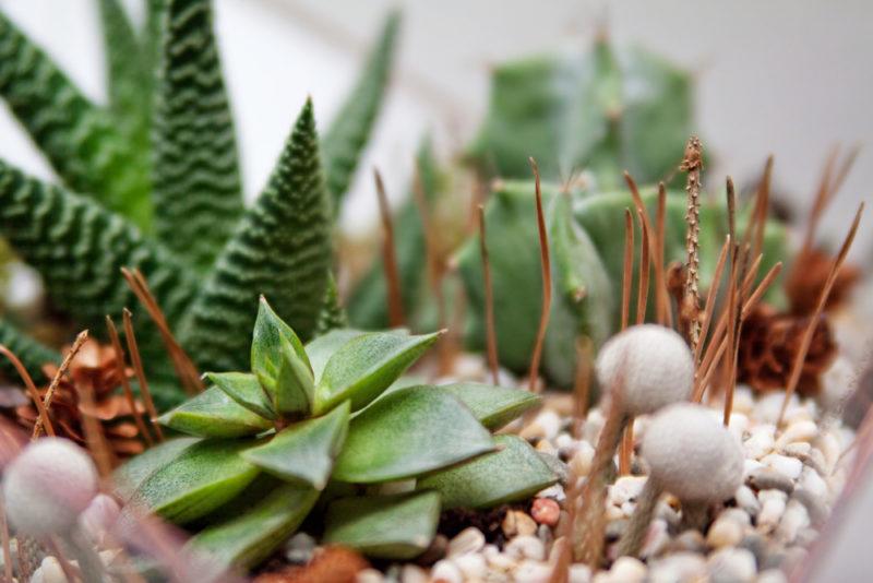 a selection of succulents for a terrarium garden