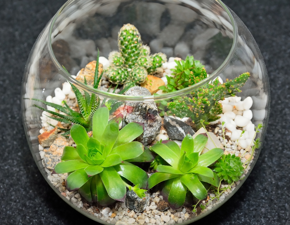 close up terrarium garden ideas for plants