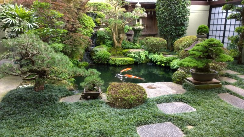 a koi pond in a Japanese style garden