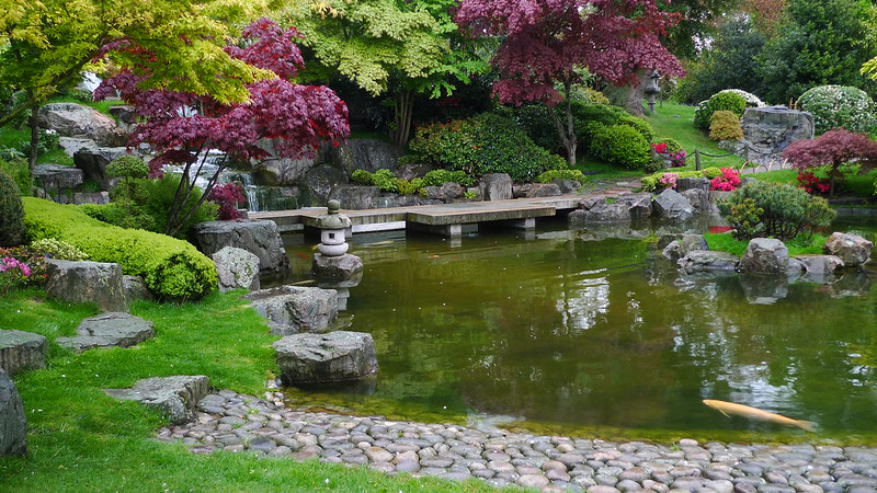 japanese style pond and stepping stones in Holland Park, London