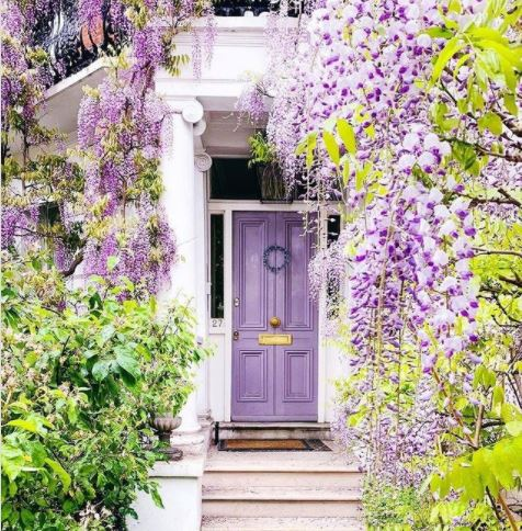 a lilac-coloured front door that matches the luxurious wisteria surrounding it