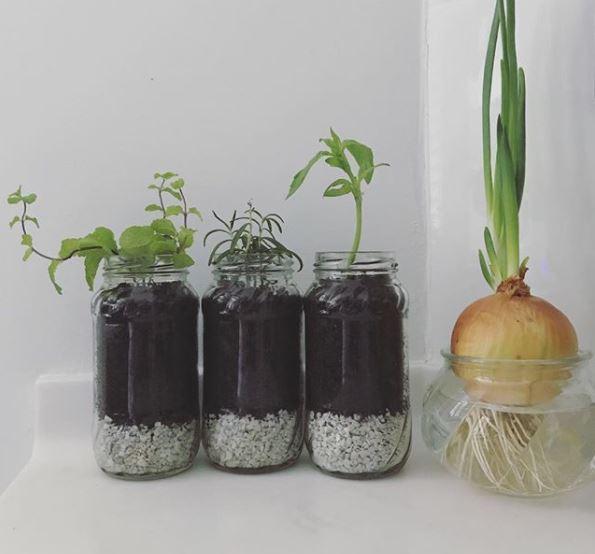 indoor herb garden ideas with reused glass jars as pots