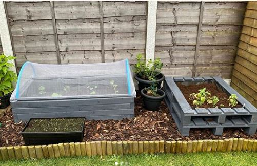 a vegetable patch with a pallet planter separating different crops