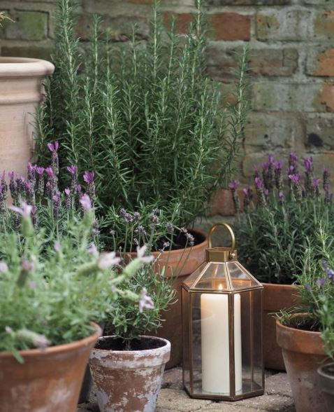lavender and rosemary with lantern