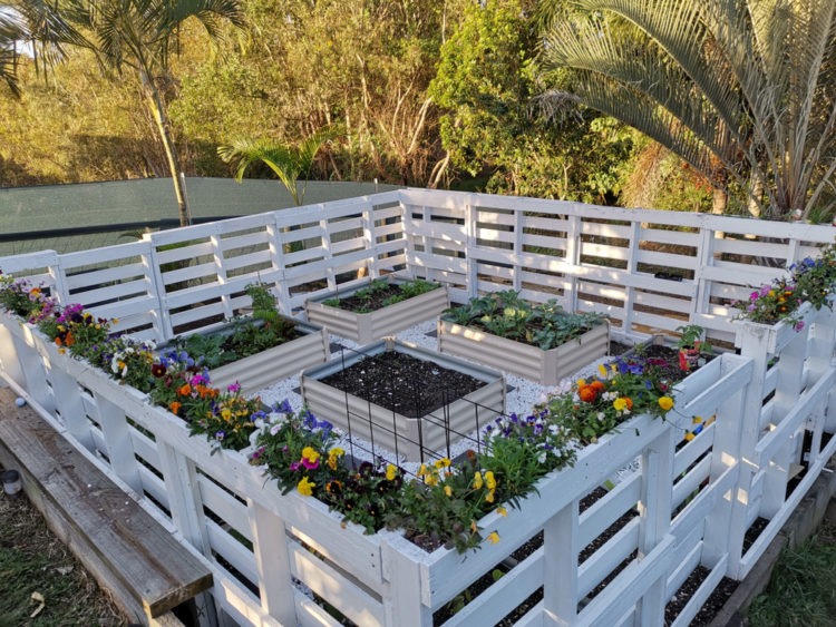 a vegetable patch and flower beds fenced in with pallets painted white