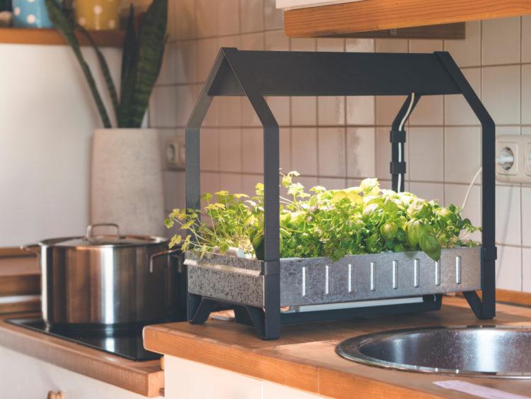 indoor herb garden ideas using hydroponics
