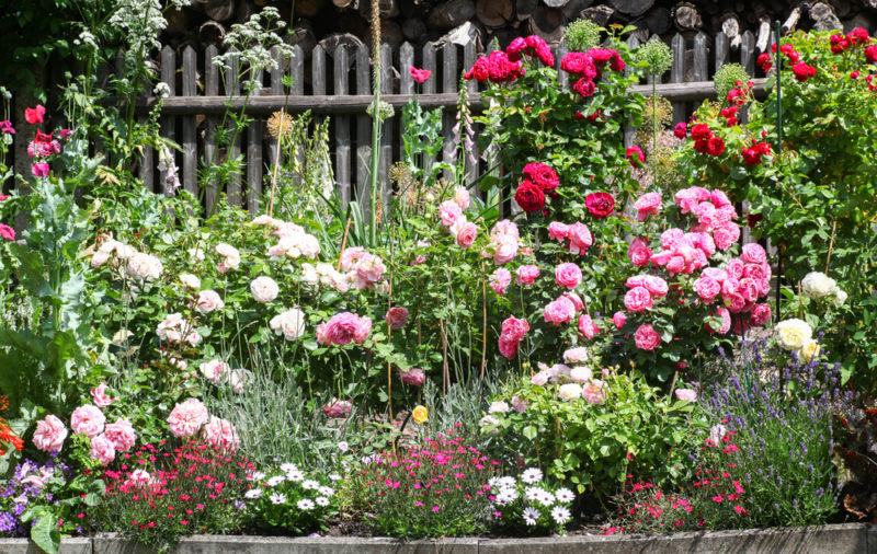 a crowded, cottage style flower bed
