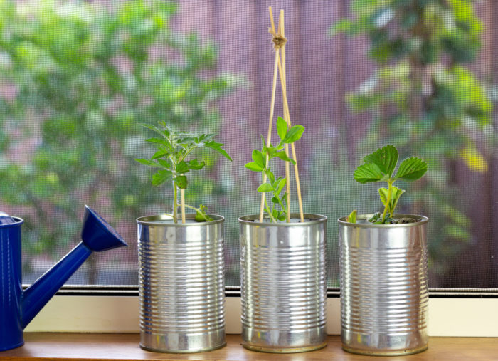 reuse soup cans as small plant pots for herbs