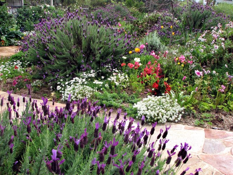 a stone path between two bushy cottage garden flower beds