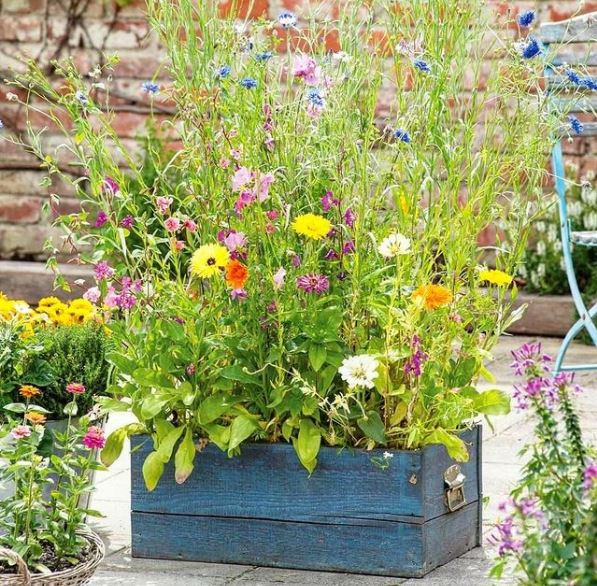 a planter filled with a variety of wildflowers to attract insects