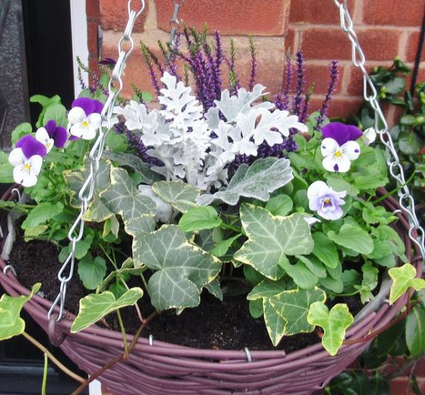 Hanging Basket Tips for a Perfect Basket of Blooms 1