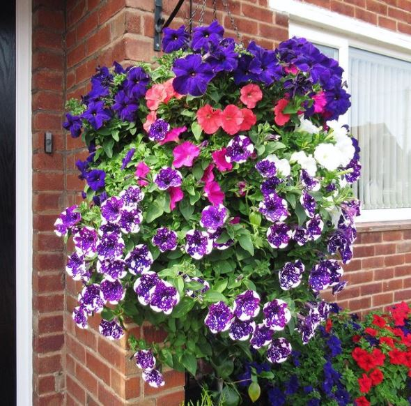 a huge, overflowing hanging baskets with a variety of flowers