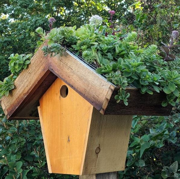 a small bird box with a large, busy green roof
