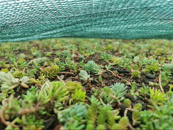 a sedum roof protected by a wind blanket, or erosion blanket