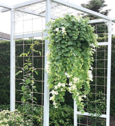 lush green hanging basket ideas with lots of trailing plants