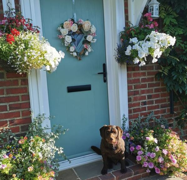 a blue front door with hanging baskets either side and a chocolate Labrador on the door step
