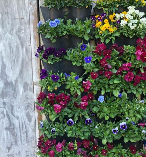 potted flowers on a wall-mounted frame to look like green wall ideas