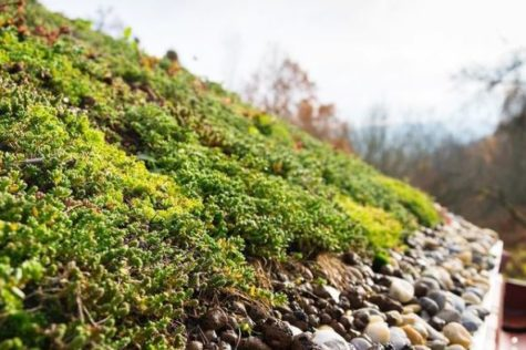 a close up of the edge of a living roof, showing a layer of retaining gravel