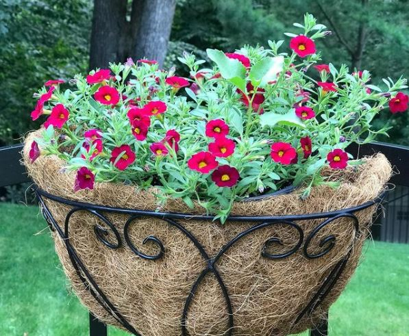 hanging basket tips: use a layer of fibres to keep soil and water in