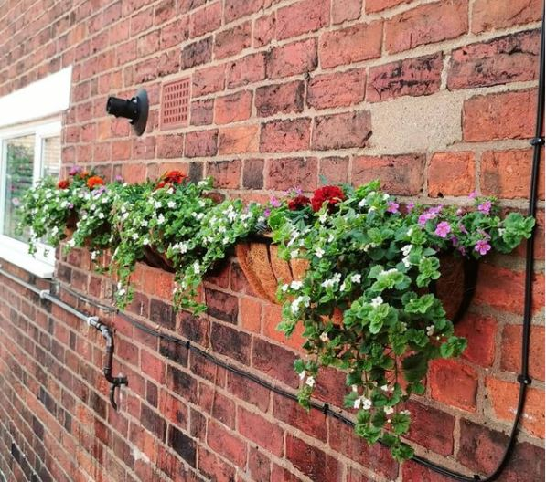 wire baskets with trailing plants attached to a brick wall