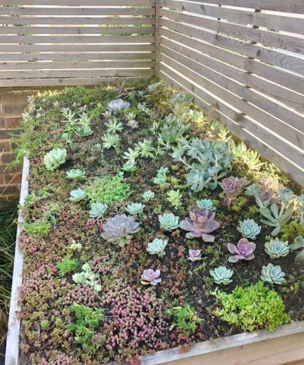 green roof ideas using a sedum mat on a bin storage unit