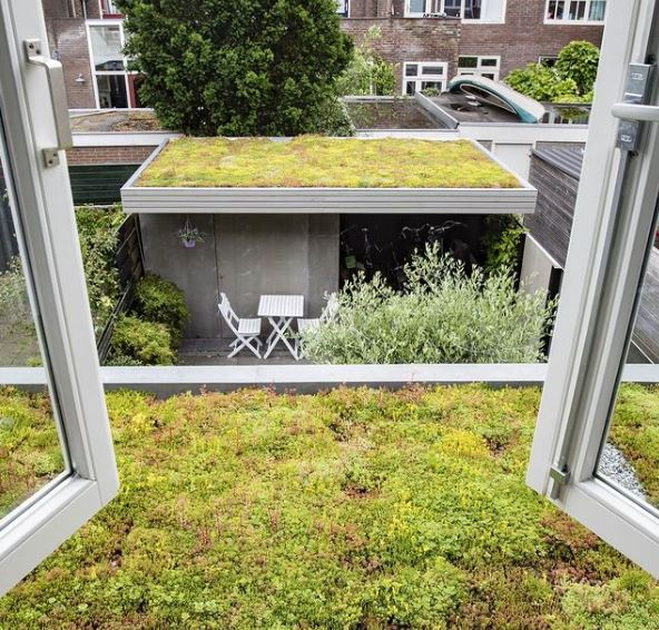 green roofing on a house extension and garden building