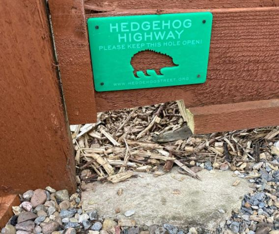 """a hole cut into a fence with a green """"hedgehog highway"""" sign above"""