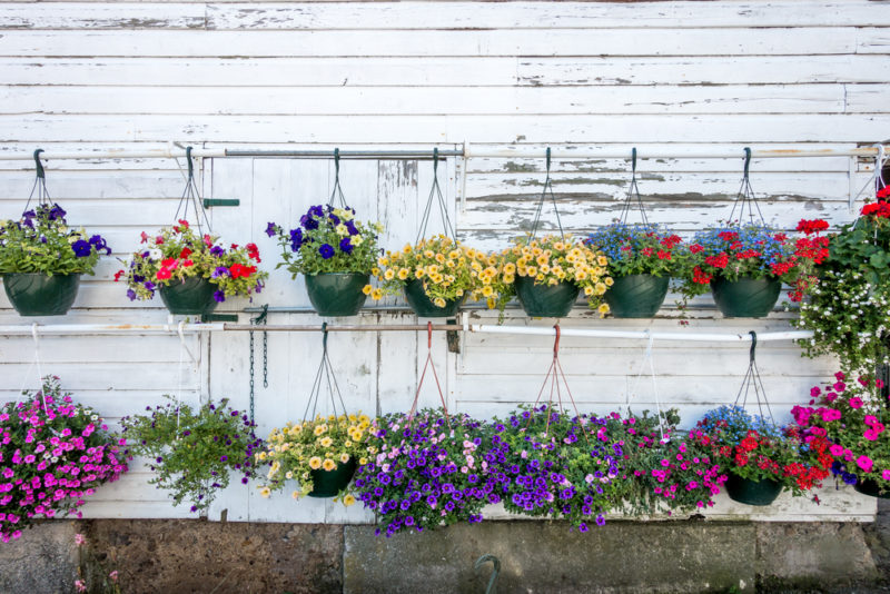 two rows of multicoloured hanging baskets on a fence