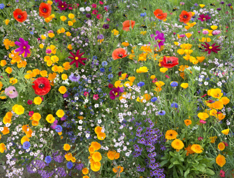 garden ideas for wildlife include planting lots of high-pollen native flowers