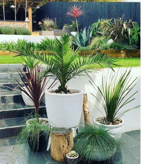 a collection of tropical plants in outdoor pots