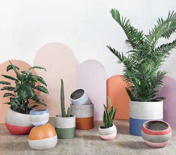 a collection of concrete pots painted with bright stripes of colour with tropical plants inside