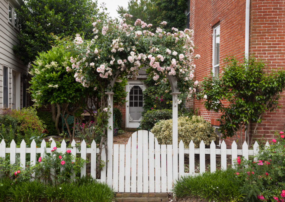 a white picket fence with a gate covered by an arch that has roses growing over it