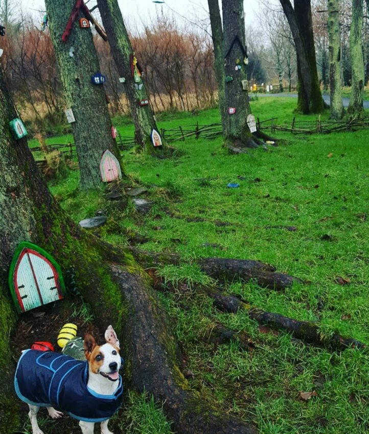 trees in a park, each with a fairy door and fairy windows climbing up the trunk
