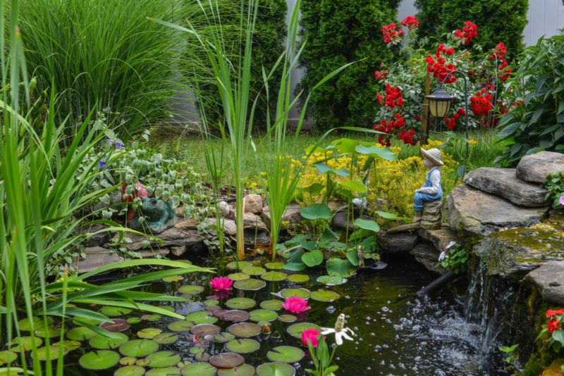 a garden pond with plants and flowers
