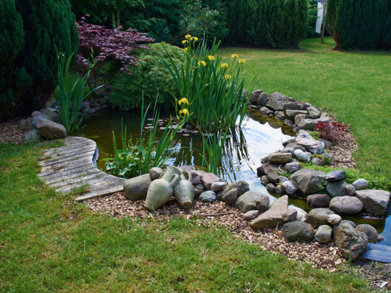 attract dragonflies to your garden with a small garden pond with plants and rocks