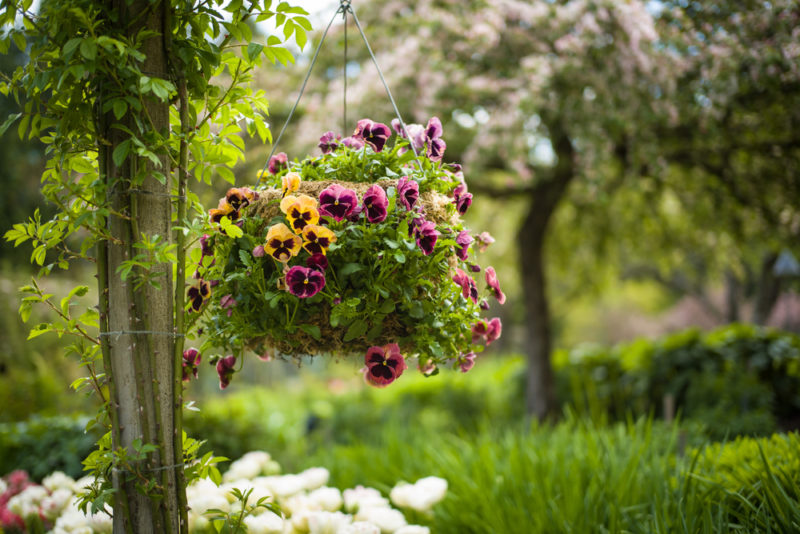 a hanging basket filled with pansies