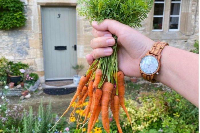 close-up of a hand clutching a bunch of carrots