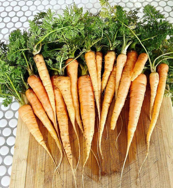 a huge bunch of homegrown carrots