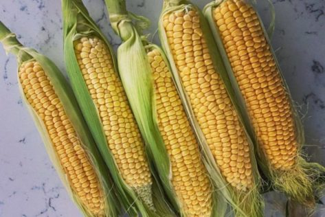 five cobs of golden corn, picked from a garden