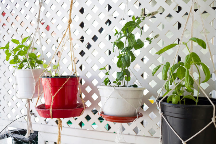 small pots hanging from a trellis with herbs and vegetables growing inside