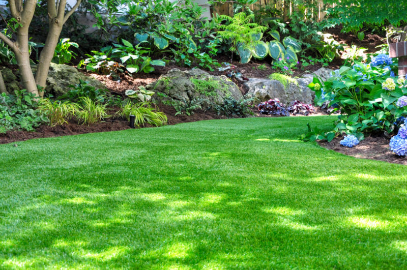 a garden lawn and vegetation in dappled light