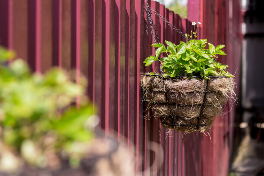 wire mesh hanging baskets attached to a fence with crops growing inside