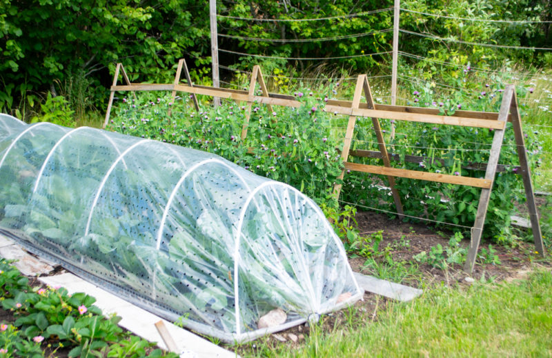 Garden vegetables to grow in spring will need protection from cold weather and pests