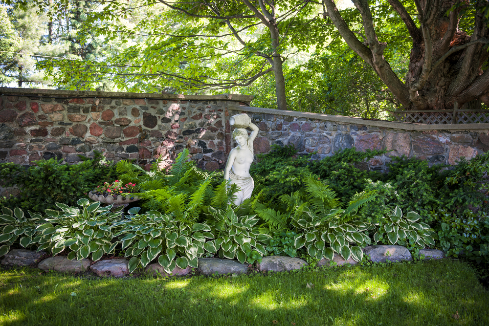 a leafy garden bed at the edge of a shady garden