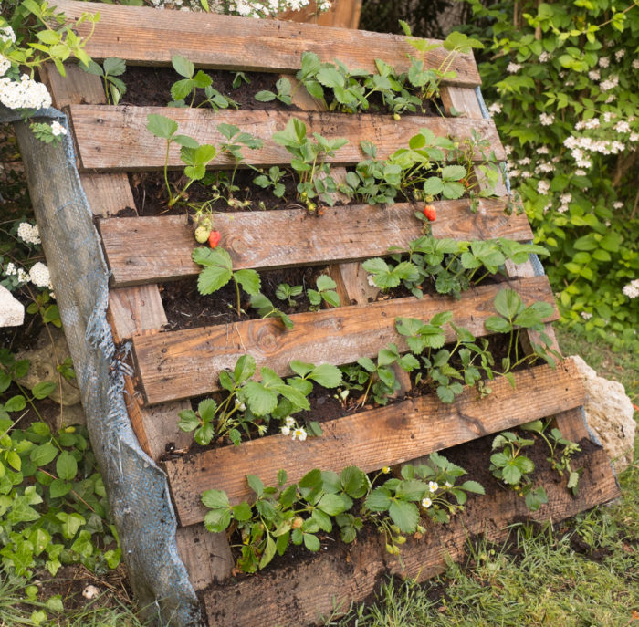 strawberries growing out of a reclaimed pallet laying on its side