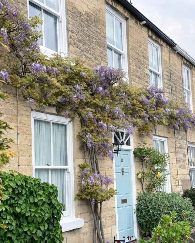a terraced home with wisteria growing up the middle