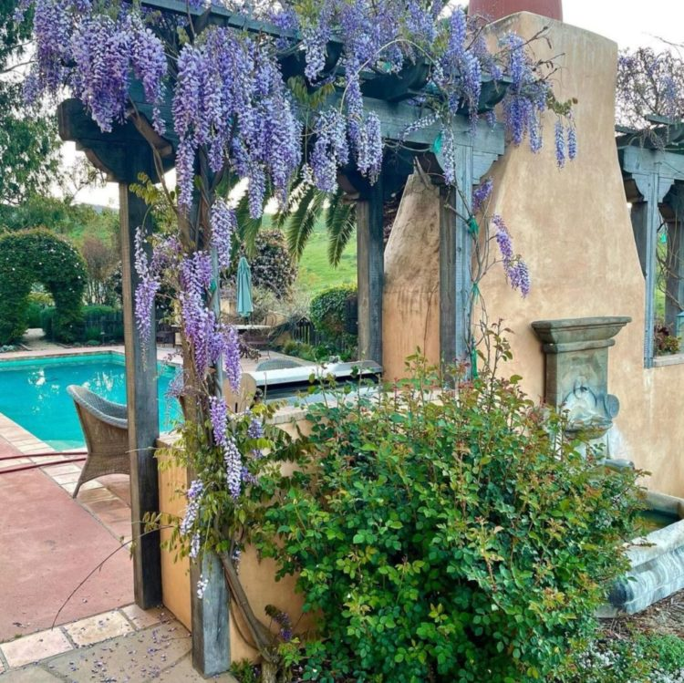 a rustic outdoor fireplace with wisteria growing on either side
