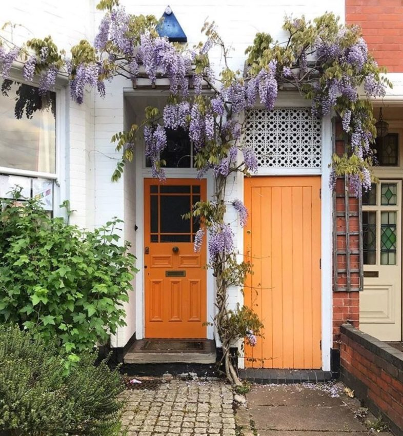 a thin vine of wisteria, trailing across a front door and storage cupboard door painted in a peachy orange colour